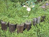 Как уничтожить вьюнок полевой в огороде