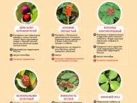 Ложный шампиньон: фото и описание, как отличить от лесного двойника
