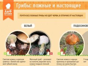 скачать грибы знакомые и незнакомые справочник определитель грибов крыма