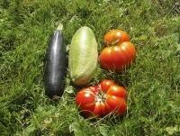 Можно ли сажать клубнику после капусты