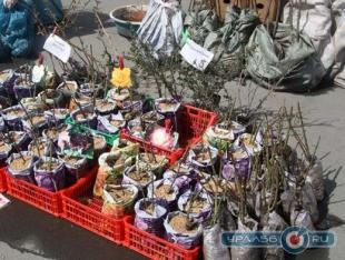 Новосибирск купить рассаду цветов