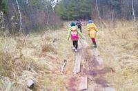 5 км идут дети в школу через лес