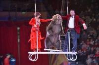 Даже медведи исполняют трюки под куполом цирка!