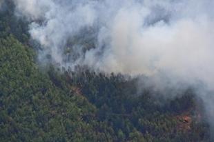 В Челябинской области за лето произошло более 400 тыс. лесных пожаров