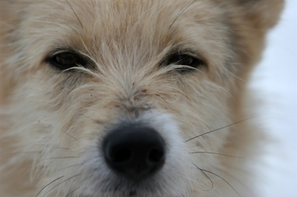 Житель Карабаша на глазах у детей забил собаку камнями