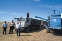 Два-три миллиона тонн зерна может пойти на реализацию за пределы Дона.
