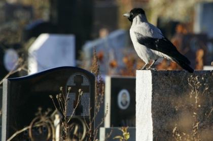 На кладбищах Миасса негде хоронить умерших