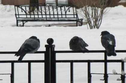 В Челябинске сегодня местами небольшой снег, переходящий в дождь