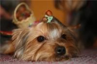 Уникальная дефиле-выставка бездомных собак, на которой каждый посетитель сможет приобрести для себя четвероногого друга, состоится в донской столице.