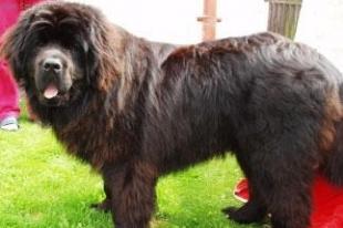 В Челябинске породистый пес разорвал 71-летнего мужчину