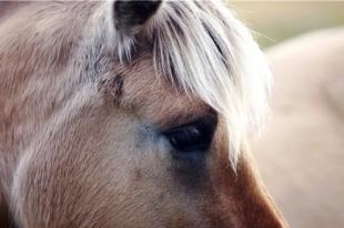 Южноуральские полицейские отыскали табун пропавших лошадей