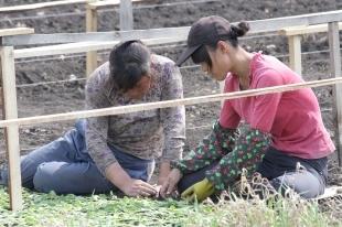 В Челябинской области Минсельхоз будет контролировать работников из Китая