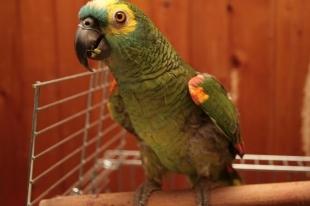 Кормить голубей с рук нельзя. Южноуральцам угрожает «попугайная» болезнь