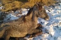 Лошади умирают на холоде.