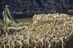 На торжественном открытии XXIV Олимпийских игр в Сеуле. 1988 год.