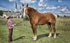 Конь по кличке «Большой Джейк», он живет в США. Его рост без подков — 210.19 см