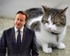 Кот Ларри переехал в резиденцию премьеров Великобритании 15 февраля 2011 года, вскоре после того, как у двери жилища главы правительства Дэвида Кэмерона  были замечены крысы