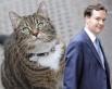 Кошка Фрейя  канцлера казначейства Великобритании Джорджа Осборна