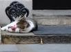 Вместо того чтобы ловить грызунов, главный крысолов Великобритании любил просто полежать, поспать, совершенно ничего не делая.