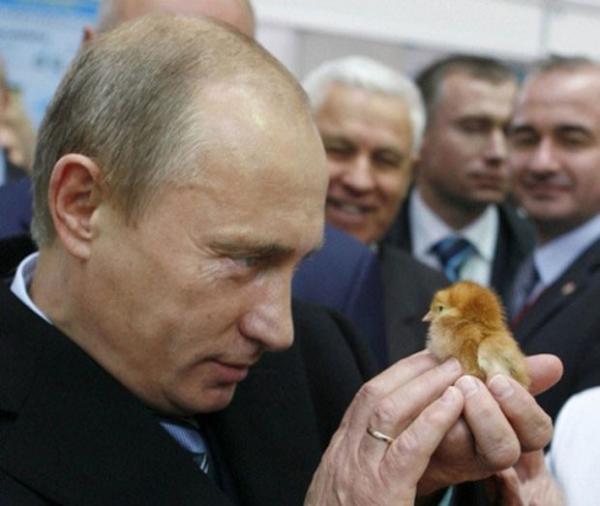 Владимир Путин во время посещения агропромышленной выставки « Золотая осень» на ВВЦ