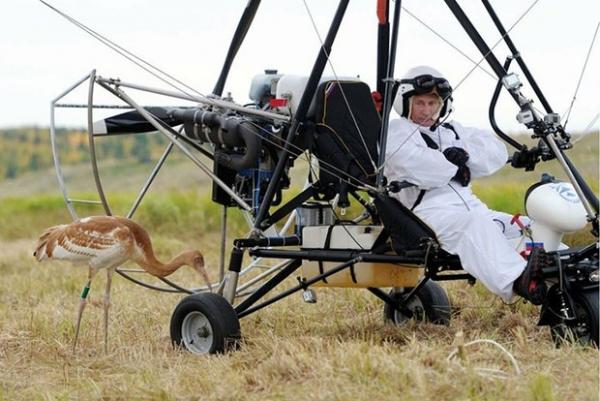 Путин поднялся в воздух на дельтаплане, изображая из себя вожака журавлиной стаи. За ним летели стерхи, выращенные в Окском заповеднике