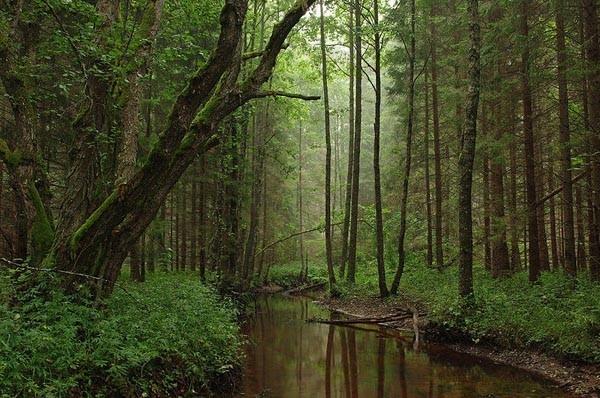 10. Природный парк в Эстонии. (Фото Ireen Trummer):  Природный парк в Эстонии