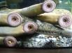 Минога представляют собой тип бесчелюстной рыбы, который живет в основном в прибрежных и пресных водах. Взрослые особи характеризуются зубчатым ртом-воронкой. Они прикрепляются к рыбе и сосут их кровь. Минога появилась на Земле более 300 миллионов лет наз