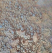 Снимки странных сферических каменных скоплений. Их происхождение и природа пока не объяснены. В целом ученые, анализирующие снимки, считают эти «изображения на поверхности» лишь рельефом, который порой может быть причудливо похож на изображения известных