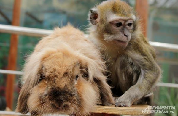 Воронежский зоосад насчитывает почти 20-летнюю историю: впервые он открылся для посетителей в декабре 1994 года. Сейчас на выставке представлено 133 вида животных: от млекопитающих до беспозвоночных. С 2002 года осуществляется программа «Возьми животное п