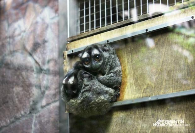 """Всего в Ленинградском зоопарке обитают около трех тысяч зверей, представлены 400 видов животных.  <br> <a href=""""http://www.spb.aif.ru/society/gallery/859"""">Их снимки - в этой фотогалерее.</a>"""