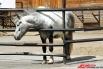 Пермский зоопарк является уникальным культурным, просветительным, научным и природоохранным учреждением в Прикамье. Он ведет свою историю от «Уголка живой природы», созданного в 1922 году при краеведческом музее. Самостоятельной организацией зоопарк  стал