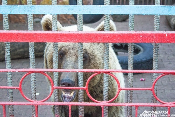 Ставропольский зоопарк – это заповедный уголок в парке Победы, одно из любимых мест отдыха как детей, так и взрослых. В зоопарке можно увидеть таких хищников, как лисы, волки, медведи, львы и тигры. В январе 2011 года в зоопарке случилась трагедия. Медвед
