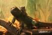 """Несмотря на небольшую площадь эколого-биологического центра «Смоленский зоопарк» (всего 260 квадратных метров), здесь смогли разместить многих довольно редких животных, среди которых есть и занесенные в Красную книгу. <br> <a href="""" http://smolensk.aif.r"""