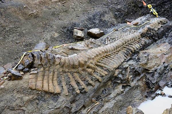 В пустынных песках на севере Мексики палеонтологи раскопали 50 позвонков хвоста динозавра.