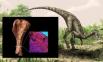 В конце 2012 года сенсацию в научном мире произвела археологическая находка, которая уже на протяжении многих столетий пылилась в кладовой Музея естествознания в Лондоне. Как оказалось, найденные еще в 1930 году в Танзании ископаемые останки ящера принадл