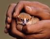 Количество известных или различаемых видов Лемуров за последние годы резко повысилось. Ещё в 1999 году к лемурообразным относили 31 вид