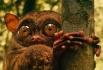 Долгопяты — небольшие зверьки, их рост составляет от 9 до 16 см. Вдобавок у них имеется голый хвост, с кисточкой на конце, длиной от 13 до 28 см. Их особо выделяют длинные задние конечности, крупная округлая голова, сидящая на позвоночнике более вертикаль
