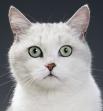 Кошки обладают стереоскопическим зрением, позволяющим оценивать расстояние до предмета наблюдения. У кошек способность к фокусировке зрения на предметах в 2—3 раза меньше, чем у высших обезьян, включая человека.