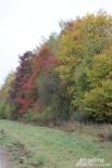 Осень в Тульской области.