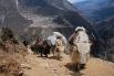 Непал. Гималаи. Путь к Эвересту.
