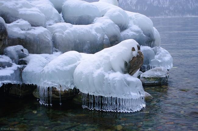 Ледяные обитатели озера. Телецкое озеро