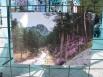 работы с фотовыставки, посвященной цветению маральника