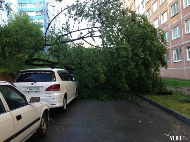 Упавшее дерево на Некрасовской, 52