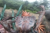 Скульптура в парке Мелодия моря