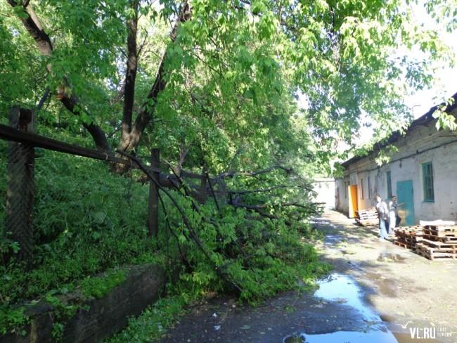 Упавшее дерево на Некрасовской, 49
