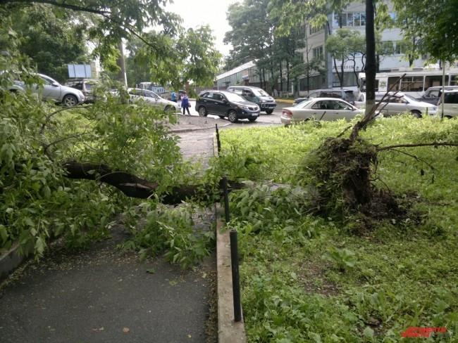 Недалеко от Русской, 65 дерево вырвало с корнем