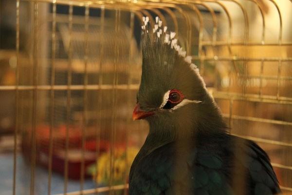 В Краеведческом музее выставка экзотических птиц