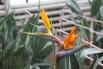 Орхидея стоимостью 5 тысяч рублей