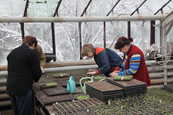 Сотрудники пикируют растения