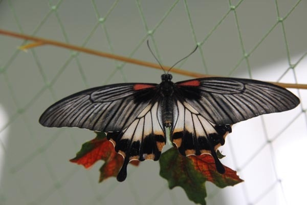 Выставка тропических бабочек в Волжском